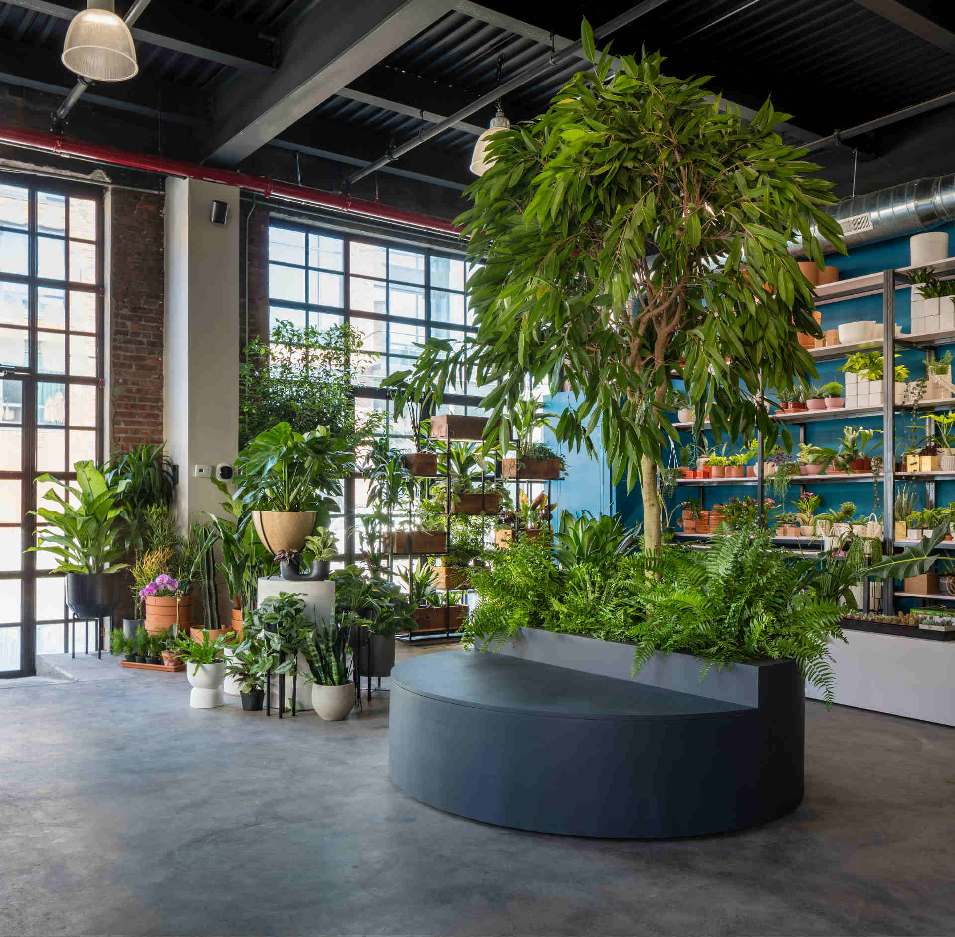Greenery Unlimited: World's First Biophilic Design Store